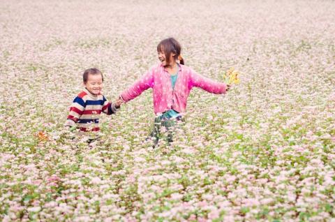 Du Lịch Đông Bắc khám phá Mùa Hoa Tam Giác Mạch